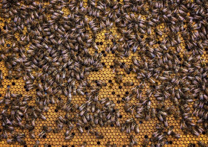 El Gobierno de CLM abona más de 355.000 euros a cincuenta apicultores de Ciudad Real para la mejora de la biodiversidad
