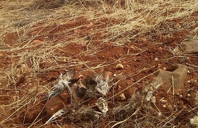 El Área de Medio Ambiente de IU denuncia la muerte de varias aves protegidas en el término municipal de Torre de Juan Abad