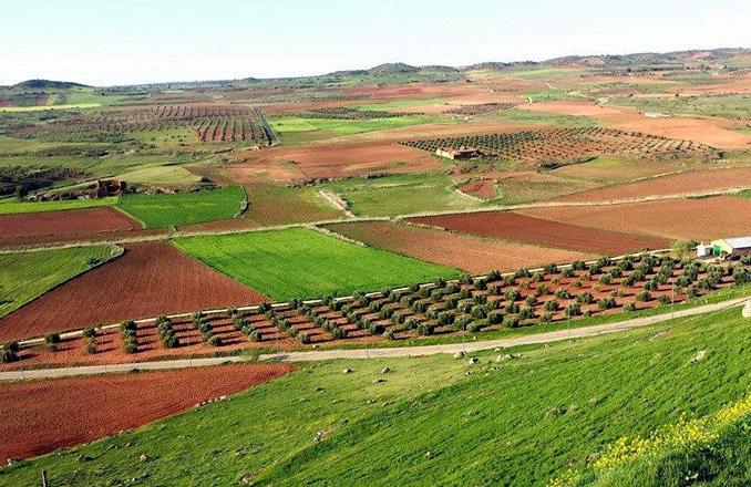 La Cooperativa 'Campo de Montiel' y 'Sí a la Tierra Viva' votan en contra de que la AD Tierras de Libertad destine ayudas a fondo perdido de 1,3 millones en la comarca