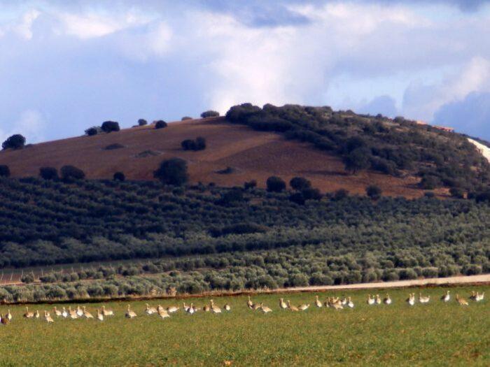 Tierras de Libertad colabora con la Fundación FIRE en la recuperación del ecosistema del Campo de Montiel