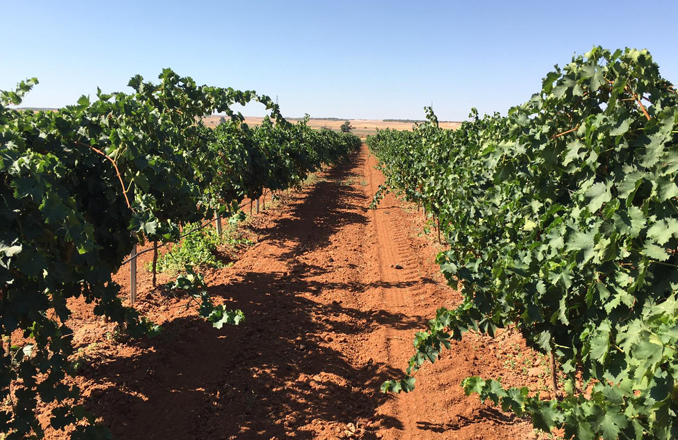 UPA:  No podemos permitir que más viticultores se vayan del sector