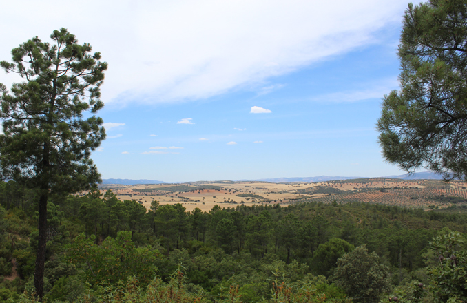 El Gobierno de Castilla-La Mancha concede ayudas para tratamientos selvícolas por valor de 5'6 millones de euros en la provincia de Ciudad Real