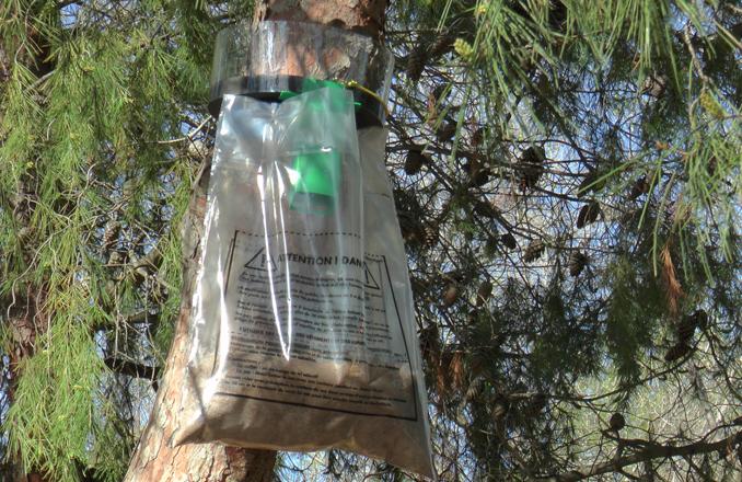 Valdepeñas incluye el control ecológico para reducir la presencia de la procesionaria