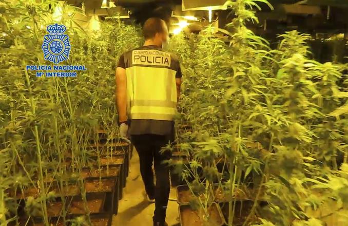 La Policía Nacional desmantela una macroplantación de marihuana con cerca de cinco mil plantas