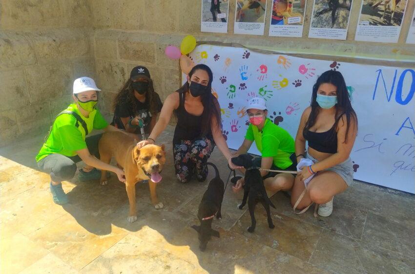 Valdepeñas promueve en una jornada la adopción de animales del Centro Municipal Canino