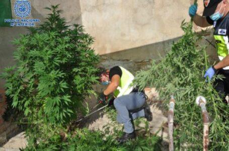 Cultivo «indoor» de marihuana en Puertollano
