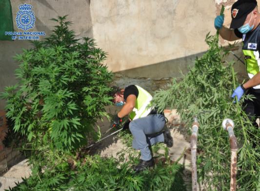 La Policía Nacional detiene a un clan familiar dedicado al cultivo «indoor» de marihuana en Puertollano