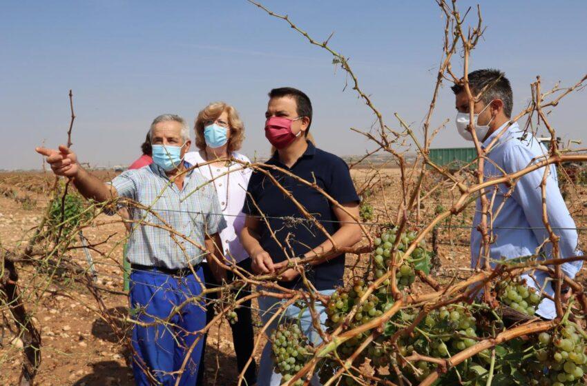 El consejero de Agricultura, Agua y Desarrollo Rural, Francisco Martínez Arroyo, ha visitado varias explotaciones de viñedo en Campo de Criptana