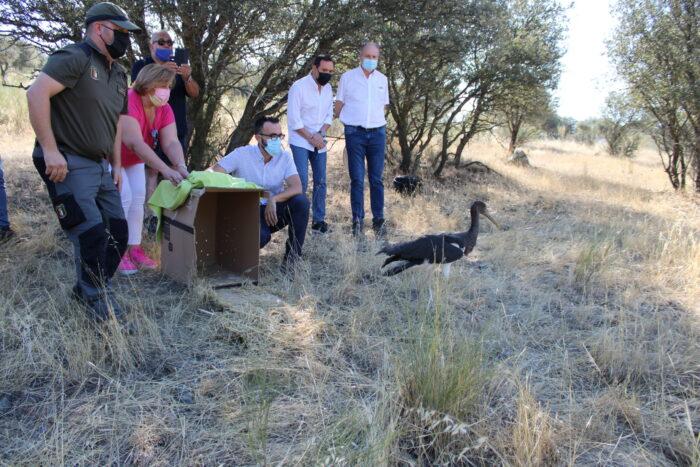 Suelta de un ejemplar de cigüeña negra recuperado en El Chaparrillo
