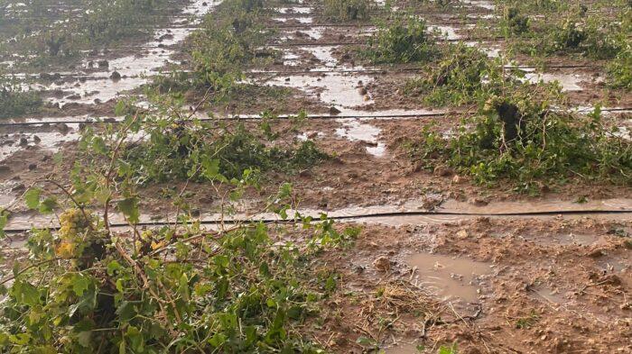 Terrenos afectados por el temporal en Campo de Criptana