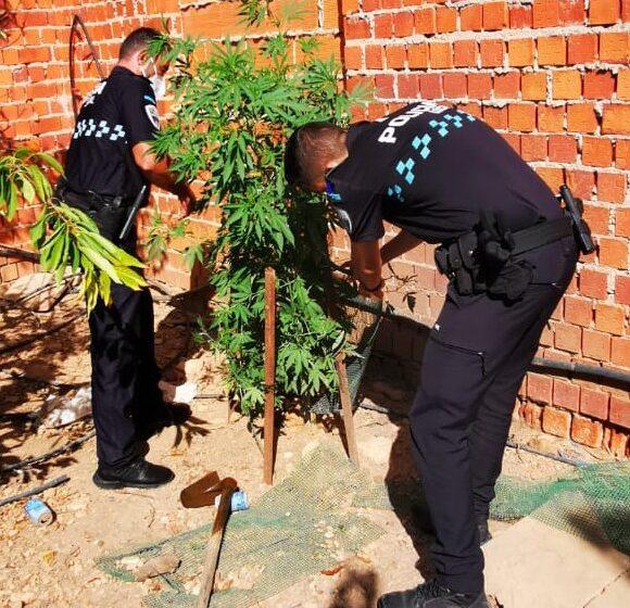 La policía local de Moral de Calatrava descubre una plantación de marihuana