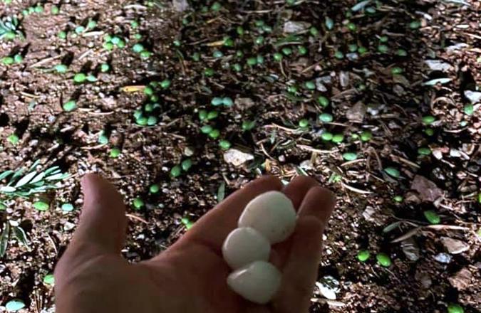 Una gran extensión de olivar de Terrinches, afectado por el pedrisco de anoche
